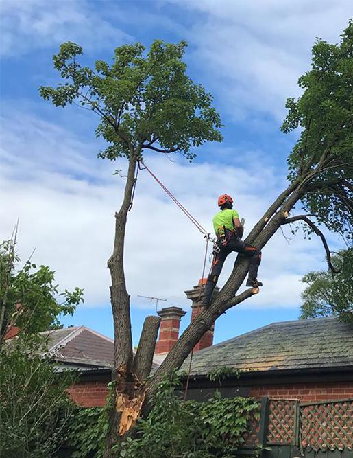 Stump & Tree Removal
